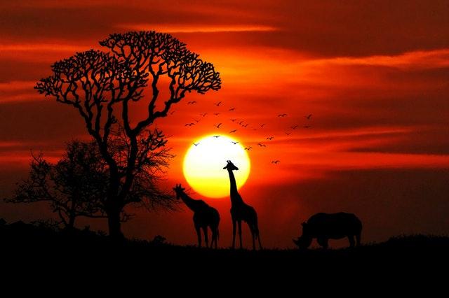 Indemnización de 3.500 euros por arruinar unas vacaciones en África en Expansión